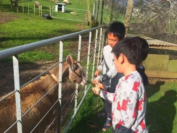 在Pukenui营地的农场与小动物接触