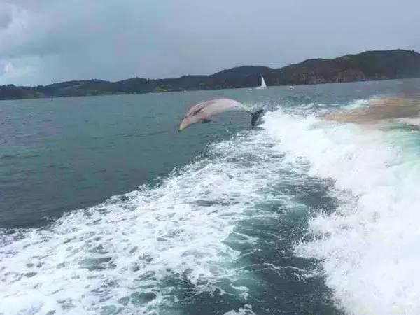 坐船观海豚一日游