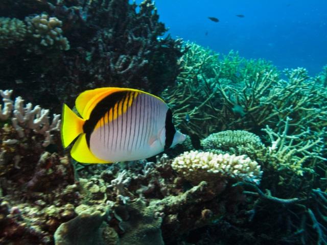 潜水大堡礁
