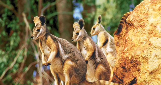 澳大利亚悉尼野生动物园