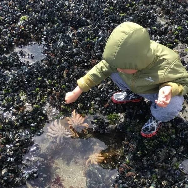 房车自驾奥克兰-在沙滩上找海星、挖青口