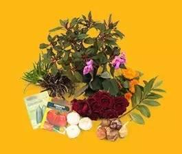种子和植物