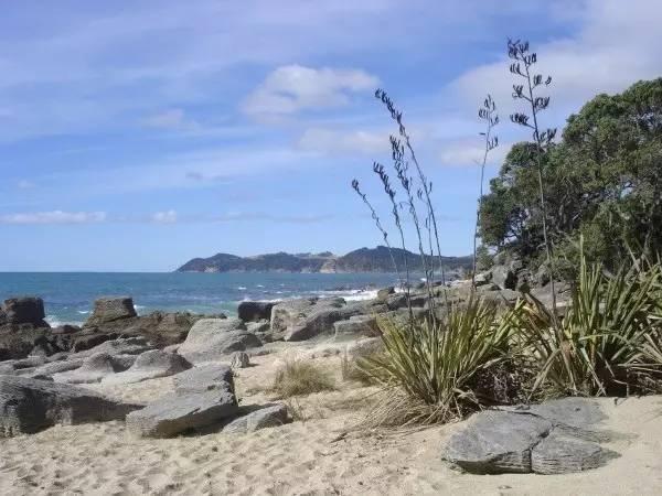 新西兰北岛-在沙滩上抓螃蟹