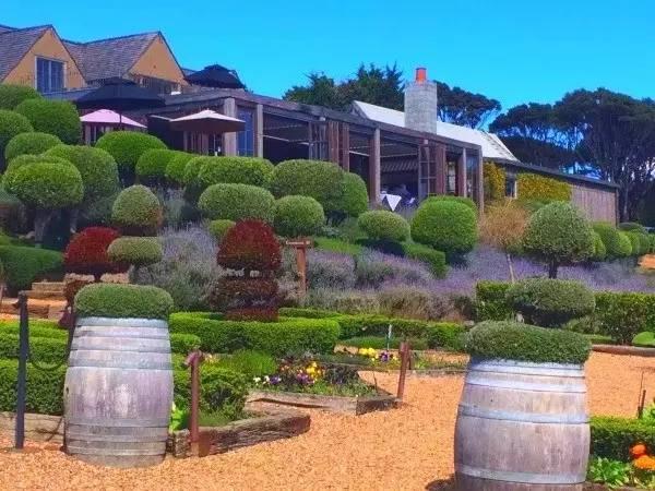 新西兰北岛-被薰衣草包围的葡萄酒庄园