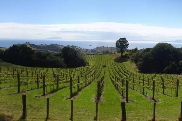 新西兰激流岛的葡萄酒庄园