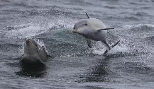 参加观海豚/鲸鱼/海豹巡游