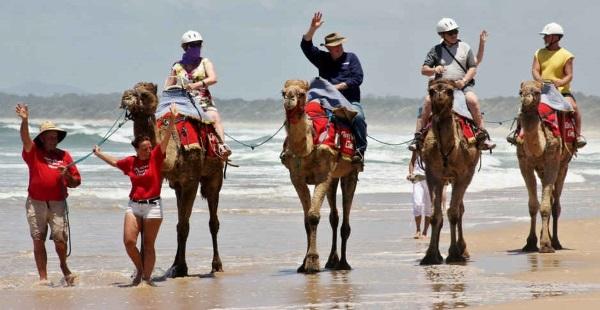 海滩上骑骆驼