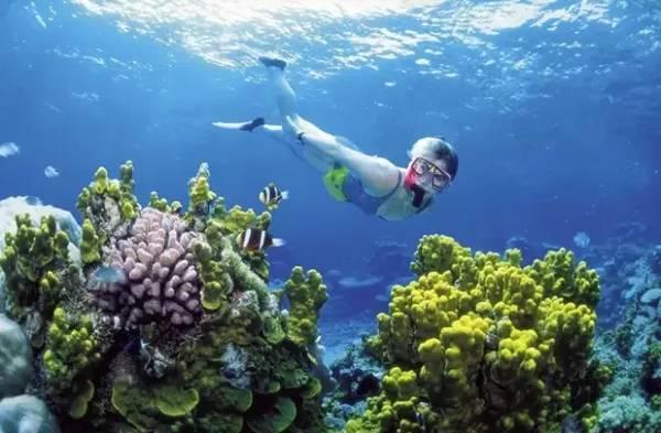 在澳大利亚·大堡礁潜水