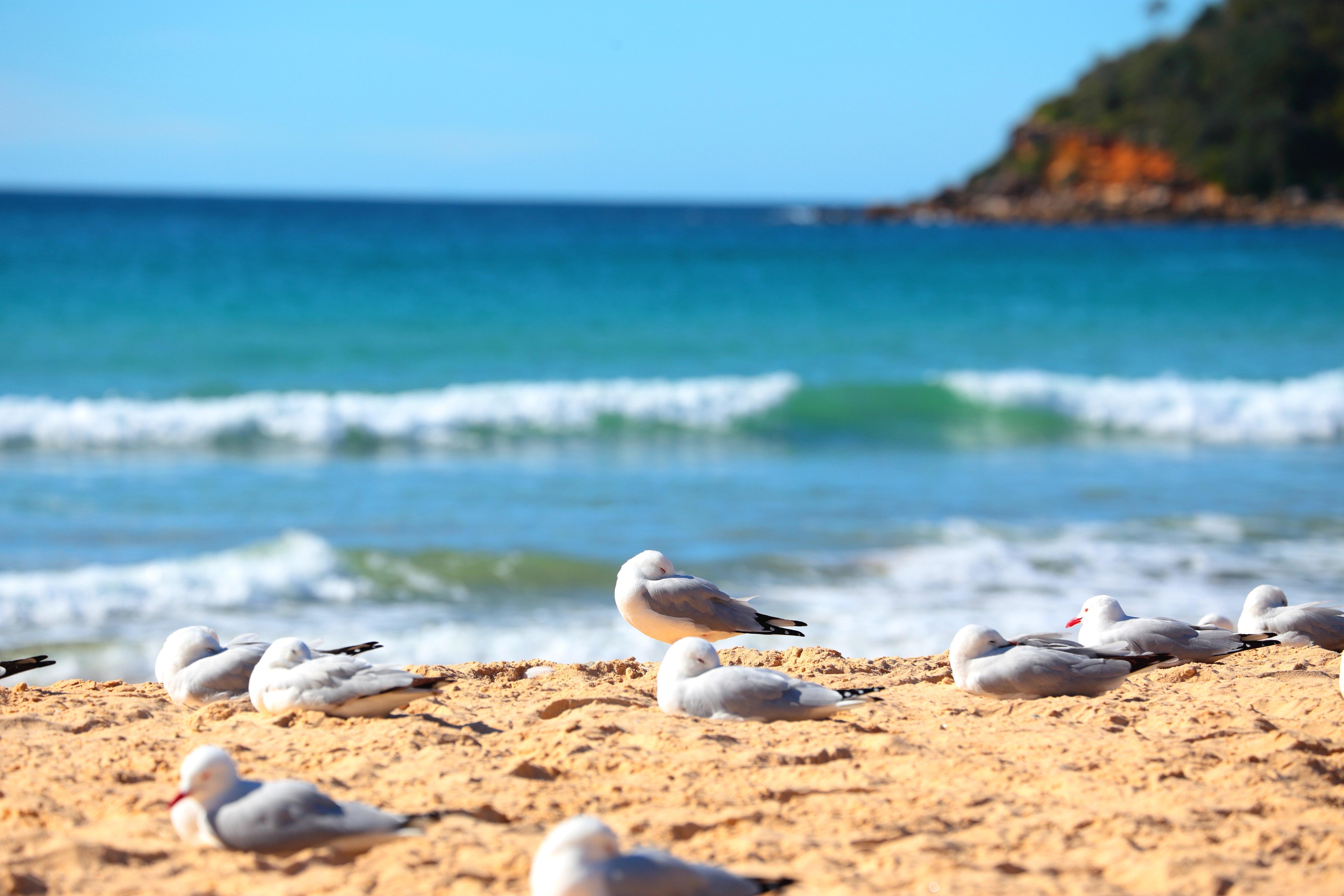 澳洲海岸边上的鸟