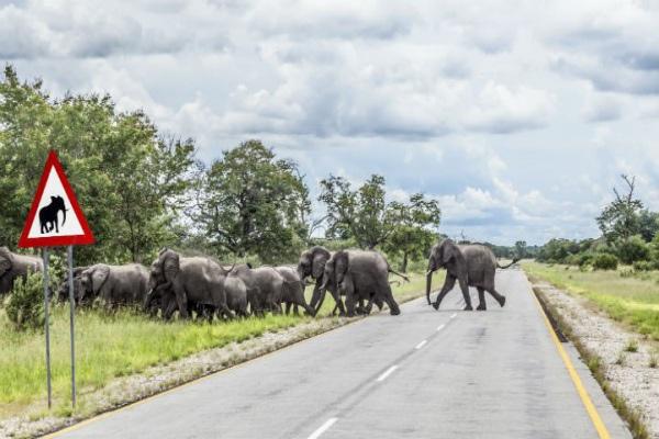 纳米比亚公路上时常有动物出没,请始终保持警惕。
