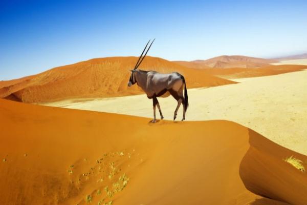 纳米比亚壮美景色,美到出人意料。