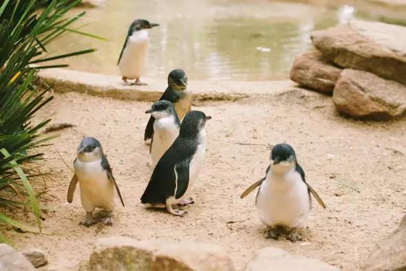 纳鲁马看小企鹅