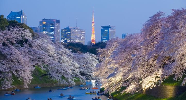这里新旧交融,您能欣赏到很多日本名胜。