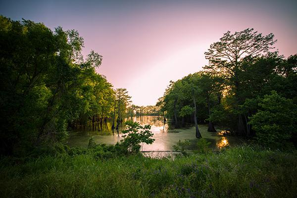 A Jackson bayou looking majestic at dusk in Mississippi