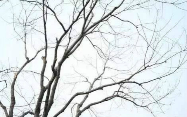 常规的冬天