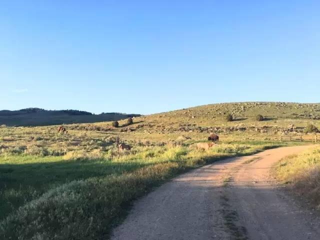 房车营地现野牛
