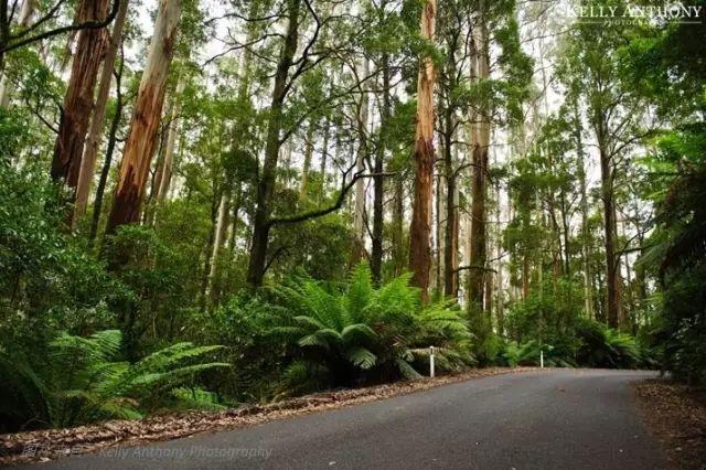 澳洲大奥特维国家公园