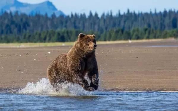 阿拉斯加熊湖