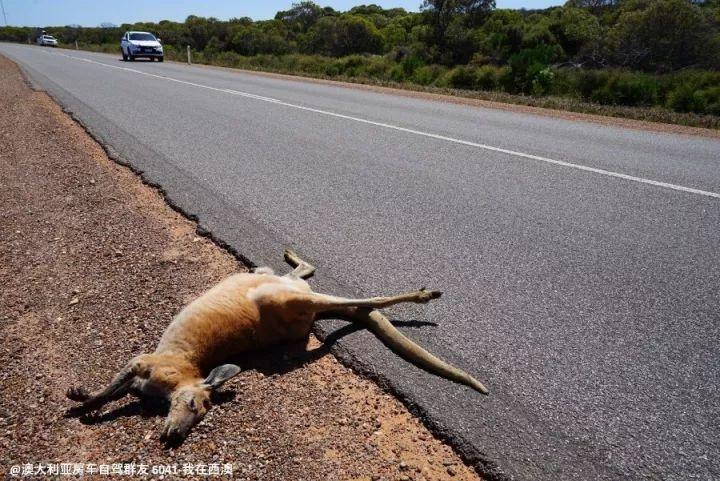 澳大利亚房车自驾游