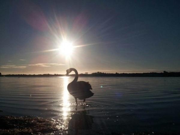 澳大利亚自然拍摄