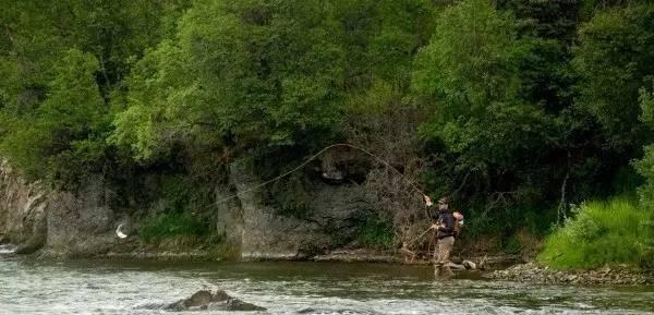 阿拉斯加铜河三文鱼