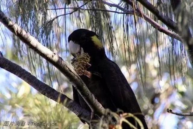 阿拉瓜国家公园鹦鹉