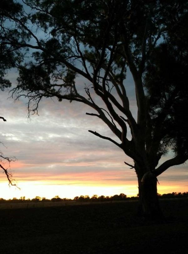 澳大利亚的傍晚