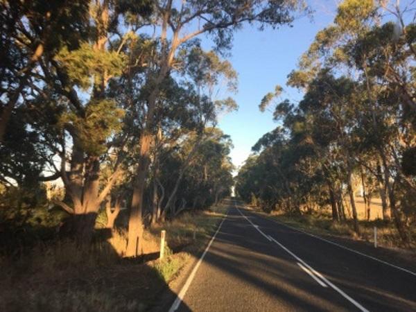 澳大利亚的道路