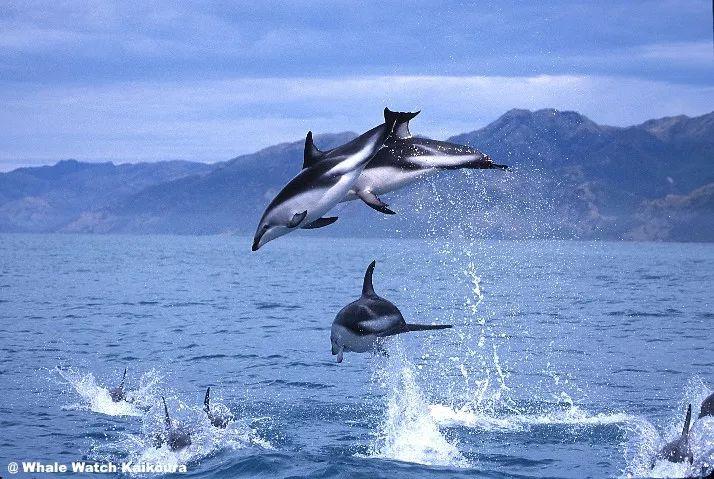新西兰房车自驾游观海豚观鲸