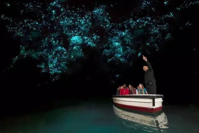 新西兰北岛萤火虫洞