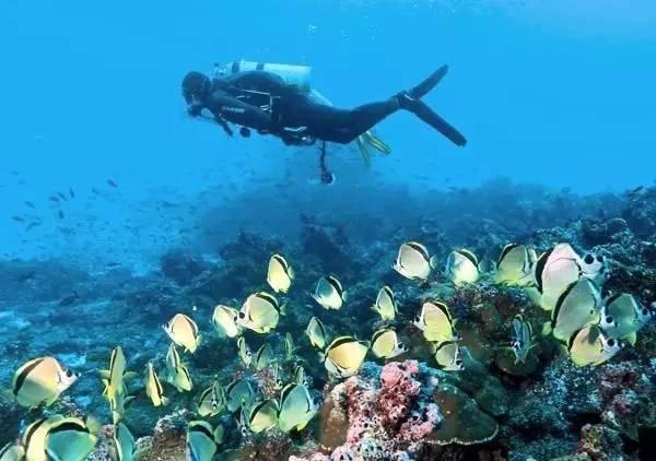 达尔文潜水