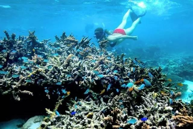 西澳大利亚珊瑚湾潜水