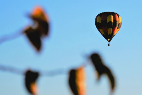 Balloons over Waikato is one of Hamilton's most iconic events.