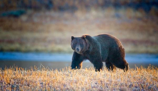 国家公园里的野生动物