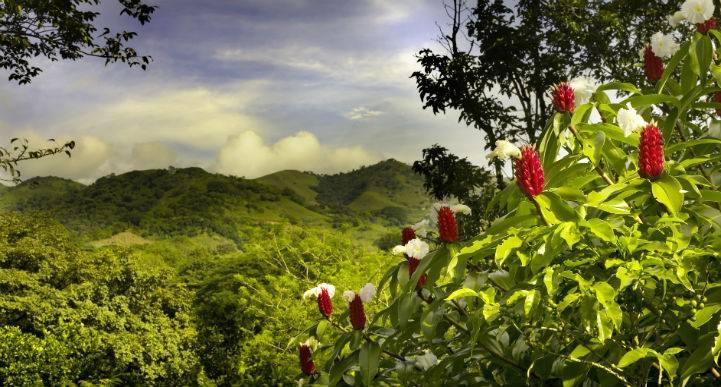 alquiler coche Costa Rica