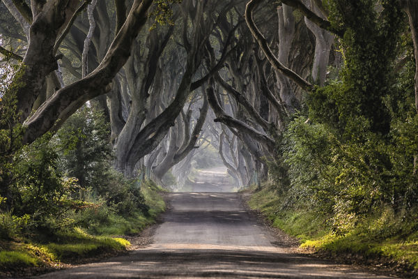 The Dark Hedges in Antrim, Northern Ireland lent their eerie atmosphere to the Kingsroad in the first season of Game of Thrones.