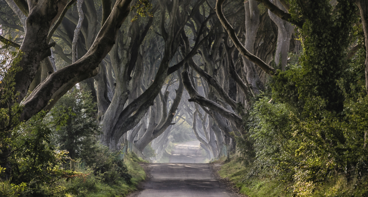 Dark_Hedges_County_Antrim_Ireland