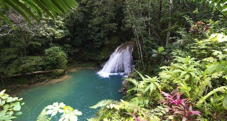 Jamaica-springs