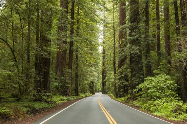 Driving through Redwood National Park will leave you awestruck by the sheer scale of these magnificent giants.