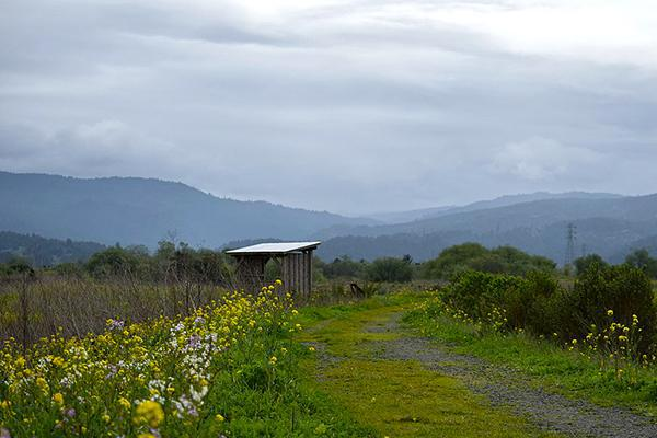 Lush vegetation with mountains in the background at the marshlands of Arcata in California