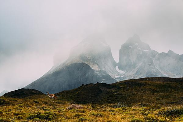 A guanaco stands amongst the Patagonian wilds at the bottom of the world