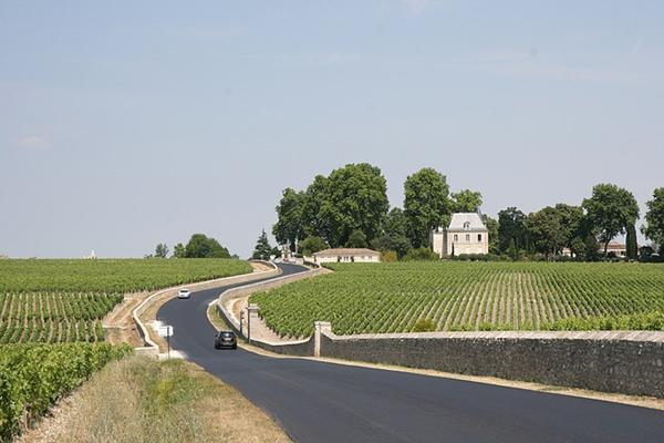 A car drives alongside a lovely vineyard in the countryside of Bordeaux, France
