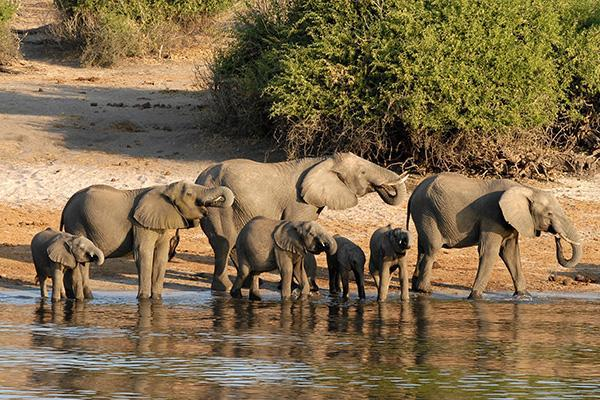A family of elephants gather to drink from the waters within the Mahango Game Reserve in Botswana