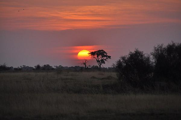 A golden sun sets on the savanna in the Okavango Delta in Botswana
