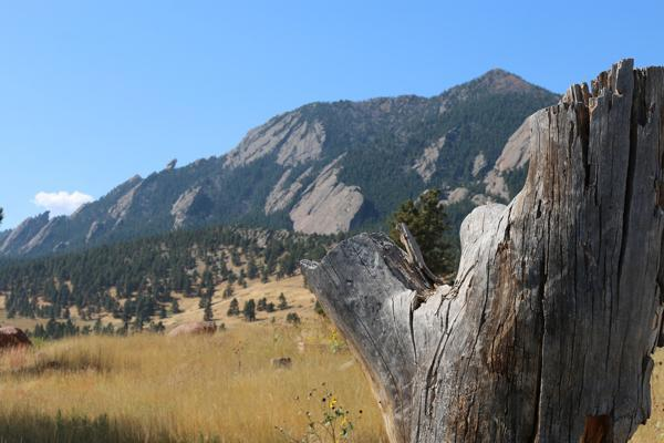A tree stump stands in the valley in front of Flatiron Mountains in Boulder, Colorado