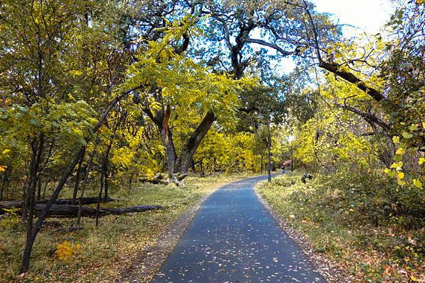A paved walkway through lush trees in Bidwell Park, Chico California