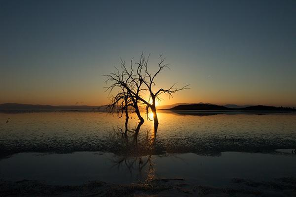 A tree stands in the waters of the Salton Sea at sunset near El Centro, California