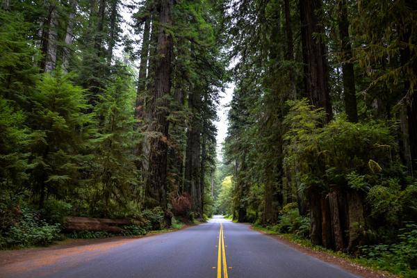 Tall, brightly coloured trees line the road in Sequoia National Park, California
