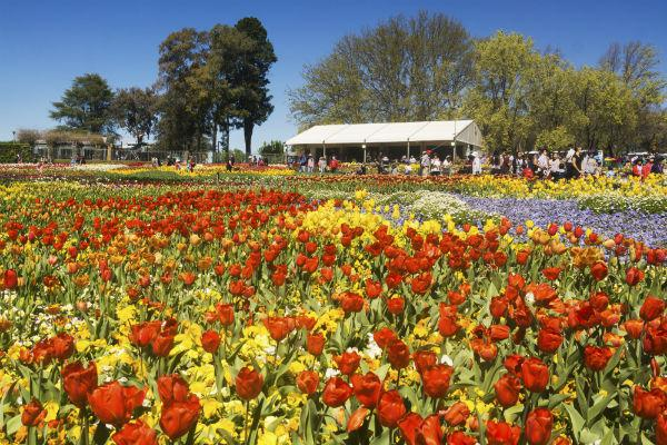 Canberra's free Floriade event draws travellers from all over the country.