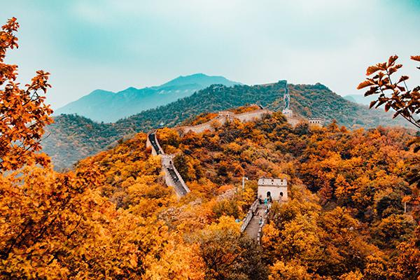 The grand Great Wall of China zigs and zags through the autumn trees of China's countryside